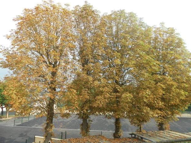 De kastanjes vallen uit de herfstige bomen voor onze woonkamer