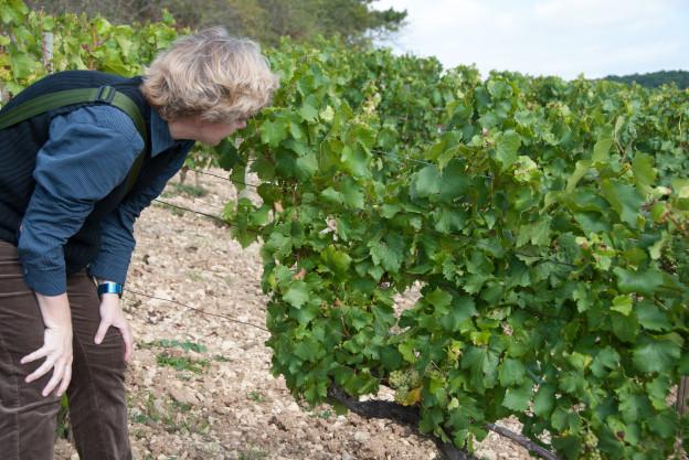 Maartje test de druiven